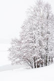 Russian winter forest in snow Royalty Free Stock Image