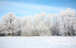 Russian winter in January Stock Photos