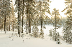 Russian winter lake in ice and snow Royalty Free Stock Photos