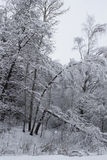Russian Winter landscape with snow. Russian Winter forest with a lot of snow and a broken tree stock image