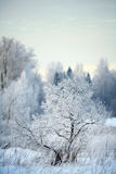 Russian winter landscape  trees in forest Stock Image