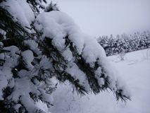 Russian winter. Photo reflects the beauty and simplicity of the Russian winter. Simple plot and cool colors. The foreground is a fresh branch of a spruce Stock Images