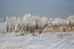 Russian winter Siberia forest snow trees snow covered roads snow frost birch snow-white trees ski tracks in the snow stock photo