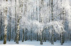 Russian winter Royalty Free Stock Photo