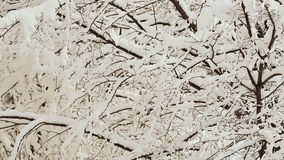 Russian winter. Tree branches in the snow. Christmas time. stock video