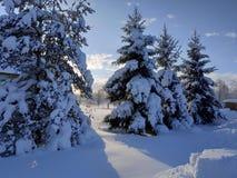 Russian winter trees. Sun and snow. Mist stock photo