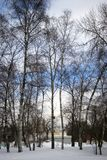 Russian winter. View of VDNKH park in Moscow, alley of trees. The ground is covered by the snow. Stock Photos