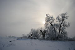 Russian winter 2 Royalty Free Stock Image