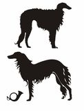 Russian Wolfhound Royalty Free Stock Images