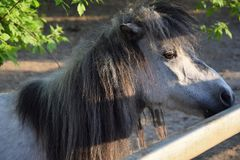 Little horse in the zoo pen royalty free stock photo