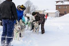 Russie kazan 14 février Poursuivez l'équipe de traîneau de chiens de traîneau sibériens mushing sur la neige tirant un traîneau q photographie stock