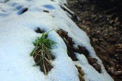 Russie La forêt russe en hiver La forêt zimny sur le bord, au bord de la forêt, la neige en hiver, l'herbe en Th Photos libres de droits