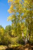Russisch bos in de herfst Royalty-vrije Stock Afbeeldingen