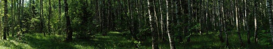 Russisch de zomer bospanorama Stock Fotografie