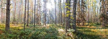 Russisch het Noorden Nationaal Park royalty-vrije stock foto