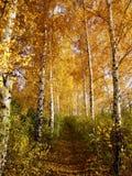 Russisch landschap Stock Fotografie