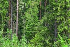 Russisch net bos stock afbeelding