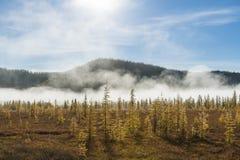 Russische aard, bosmist, pijnboombomen in mist, de herfst, zonstralen royalty-vrije stock afbeeldingen