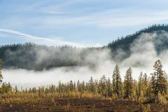 Russische aard, bosmist, pijnboombomen in mist, de herfst, zonstralen stock afbeeldingen