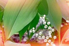 Russische aard, wilderniswereld Het lelietje-van-dalen van bloemen Stock Foto's