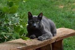 Russische blaue Katze auf Geländer lizenzfreies stockfoto