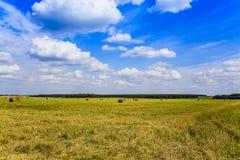 Russische hemel en een gebied met gemaaid die hooi, in de banen op een duidelijke de zomerdag wordt geoogst in August Moscow-gebi royalty-vrije stock foto's