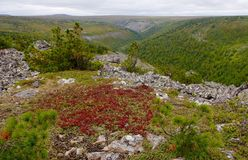Russische Natur Stockfotos
