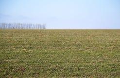 Russische prairie in de winter Stavropol Royalty-vrije Stock Foto