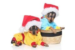Russische Spielzeug-Terrierwelpen in der Winterkleidung Lizenzfreies Stockfoto