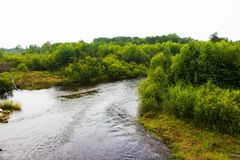 Russischer Fluss und grüner Wald lizenzfreie stockbilder