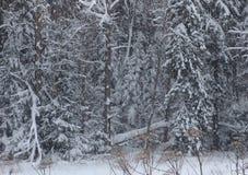 Russischer Wald lizenzfreie stockfotos