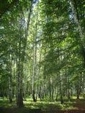 Russischer Wald Stockfotografie