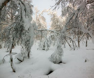 Russischer Winter Stockfotos