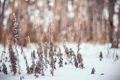 Russischer Winter im Wald Stockbilder