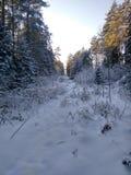 Russischer Winter, Wald, Schnee, Jagd, Kälte, Landschaft Stockfotos
