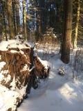 Russischer Winter, Winterwald Lizenzfreie Stockbilder