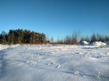 Russischer Winter, Winterwald, Wintertag im Wald, Landschaft, Bäume im Schnee, außerhalb der Stadt, auf der Jagd stockbild