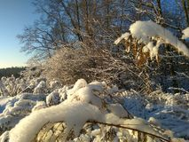 Russischer Winter, Winterwald, Wintertag im Wald, Landschaft, Bäume im Schnee, außerhalb der Stadt, auf der Jagd stockfotografie