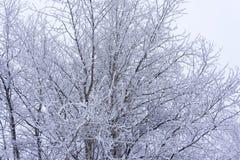Russischer Wintersaisonhintergrund Eisige Baumniederlassungen des schönen Winters mit vielem Schnee Schnee deckte Bäume im Winter Stockfotografie