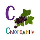 Russisches Alphabet, Buchstaben Beschriften der modernen Kalligraphieart Lizenzfreie Stockfotografie