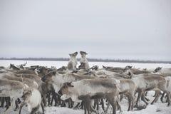 Russisches arktisches eingeborenes Lizenzfreies Stockfoto