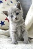 Russisches blaues Kätzchen Lizenzfreie Stockfotos