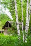 Russisches Dorfhaus unter einer Birke Stockfotos