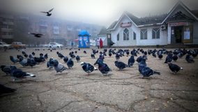22-10-2013, Russland, Ferner Osten, Spassk Dalnij - hungrige graue Tauben im Quadrat nahe dem Shop und auf seinem Dach Stockbilder