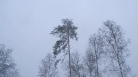 Russland, im Februar 2019: Blizzard und große Antriebe Ein starker Wind rüttelt die Bäume im Winterwald stock footage