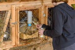 Russland, Suzdal, im September 2017 Kinder ziehen Kaninchen in einem Käfig von ihren Händen ein Stockfotografie