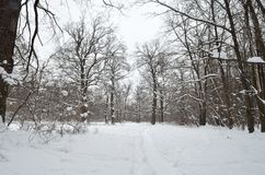 Russland, UralJanuary, Temperatur -33C Stockfotos