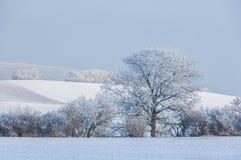 Winter-Landschaft mit Neuschnee Stockfotografie