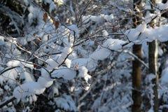 Russland, UralJanuary, Temperatur -33C Lizenzfreies Stockbild