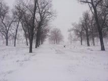 Russland, UralJanuary, Temperatur -33C Bäume im Schutz eines Winterblizzards Hintergrund auf einem Winterthema Stockbilder
